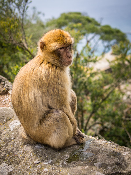 He Just Wants to Be a Monkey, Gibraltar