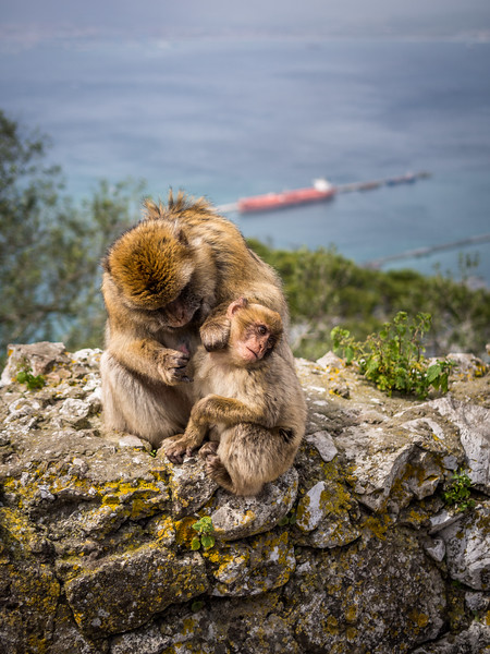 Groom with a View, Gibraltar