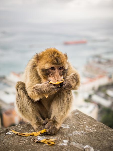 Last Bite, Gibraltar