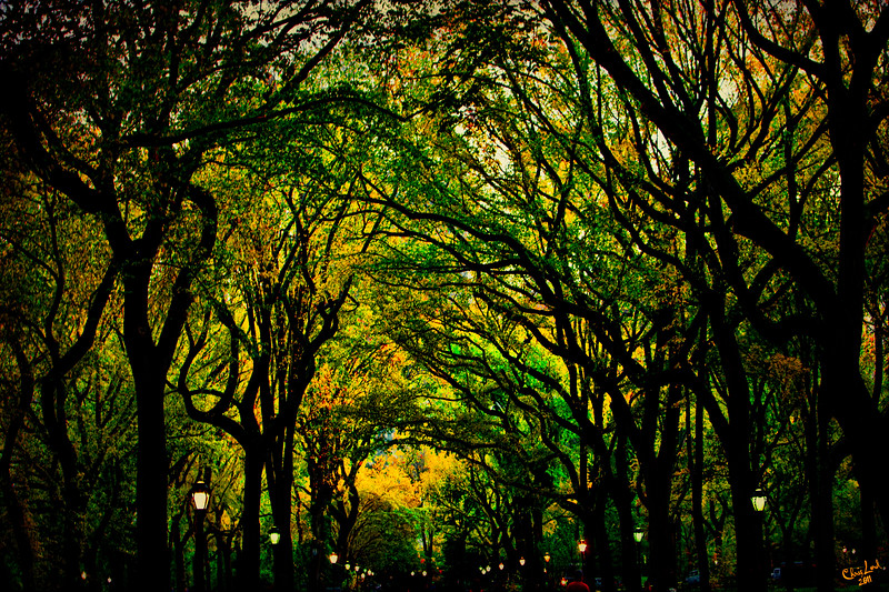 The Mall In Fall, Central Park