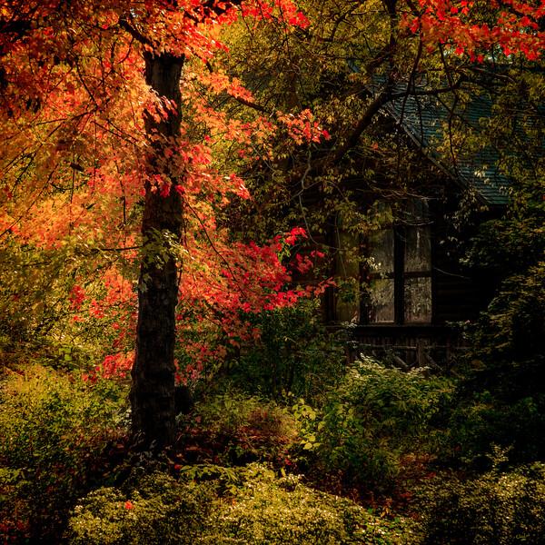 Swedish Cottage In Autumn