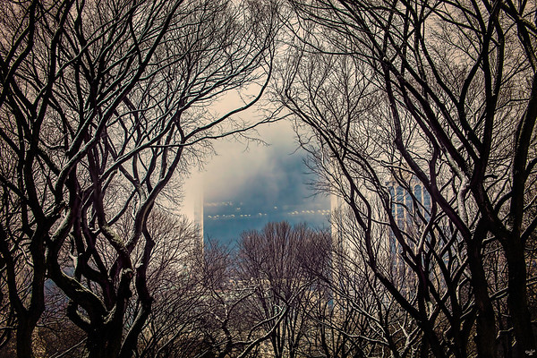 The Literary Walk In Winter