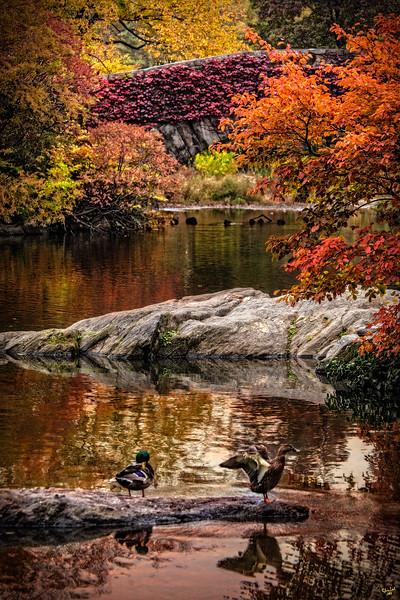 Ducks in Central Park During Autumn