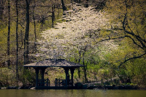 Lakeside Shelter