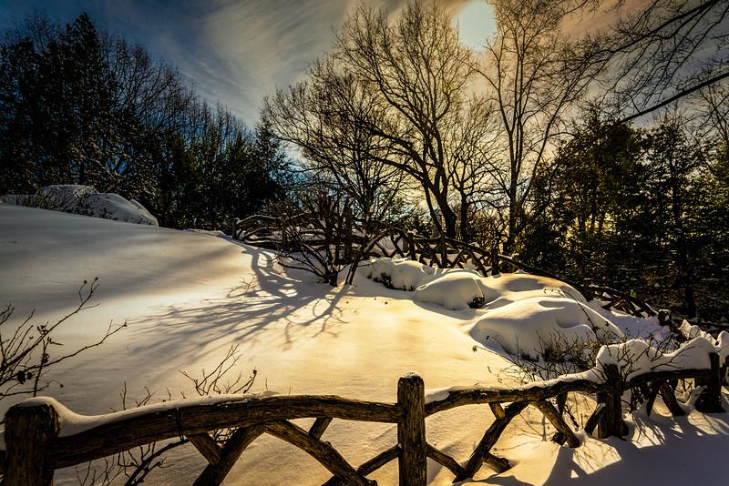 The Shakespeare Garden In Winter