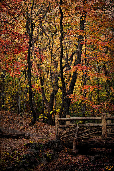 Autumn In The Rambles, Central Park