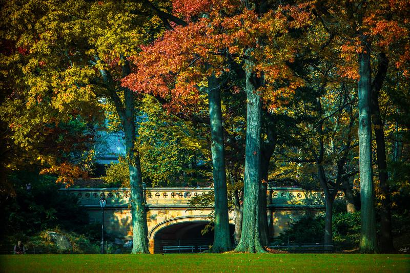 The Bridge Under The Trees