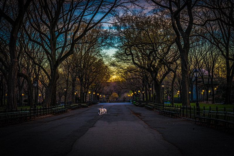 Doggies On The Mall At Dawn