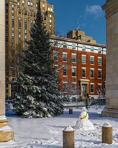 Washington Square Tree