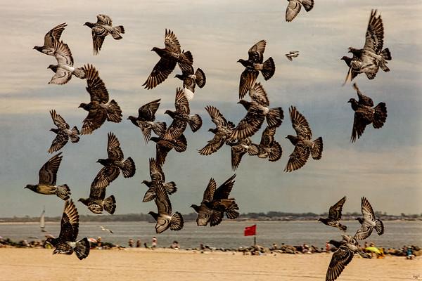 Beach Flight