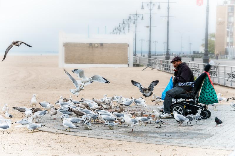 The Gullman Of Coney Island Beach