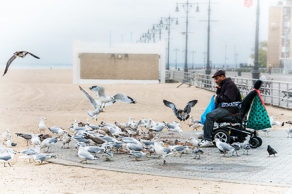 The Gullman Of Coney Island Beach