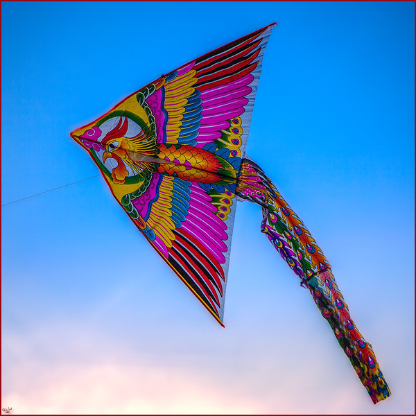 Asian Kite, Flushing Meadows Park