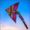 Asian Kite, Flushing Meadows Park