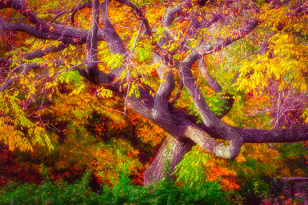 From An Autumn Trip To Wave Hill Gardens In New York