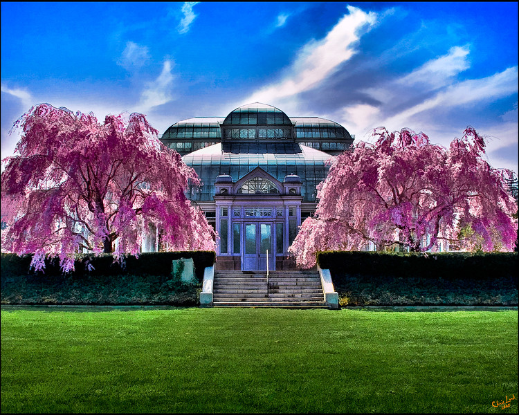 The Conservatory at the Bronx Botanical Garden Surounded by Spring Blossoms