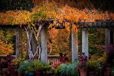 Autumn Wisteria