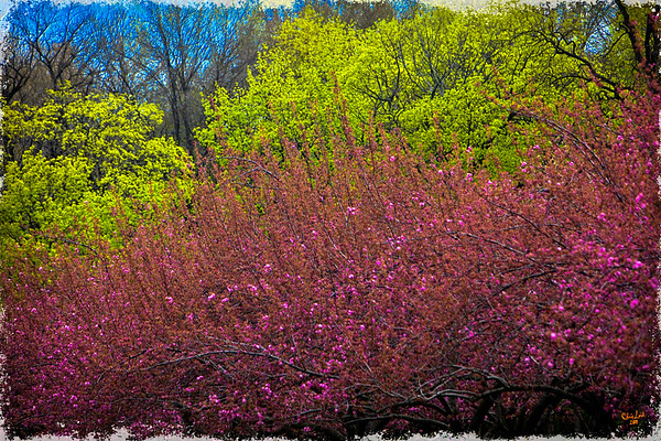Colors of Spring At Brooklyn Botanical Garden
