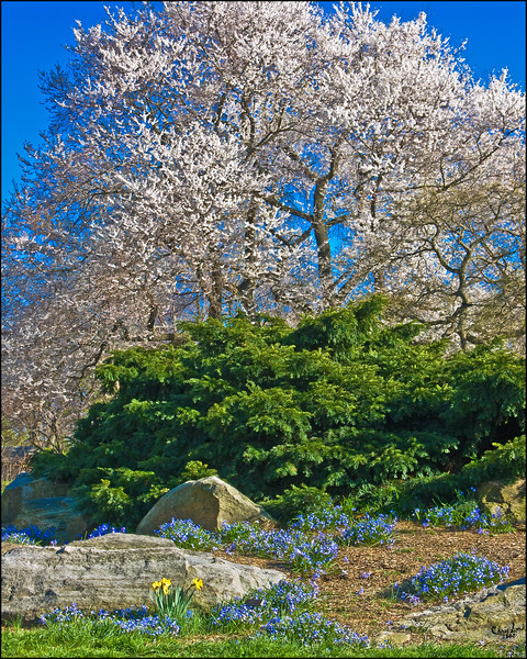 Spring At The Bronx Botanical Garden