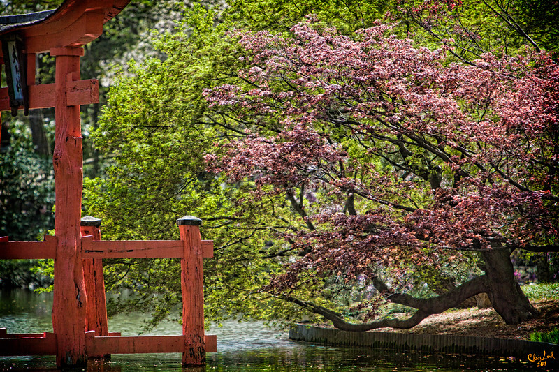 Spring in the Japanese Garden At Brooklyn Botanical Garden