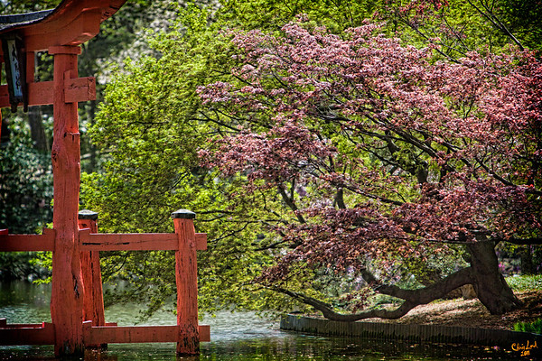 Spring in the Japanese Garden At Brooklyn Botanical Garden