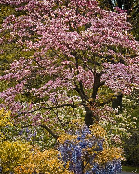 Spring Foliage At The Brooklyn Botanic Garden