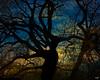 Winter Trees Sunrise At Brooklyn Botanical Garden