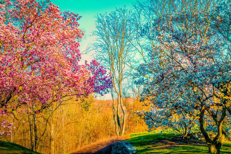 Spring At NYBG