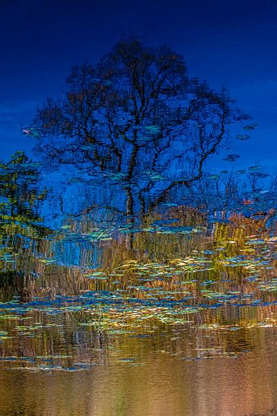 Tree Reflection, Prospect Park