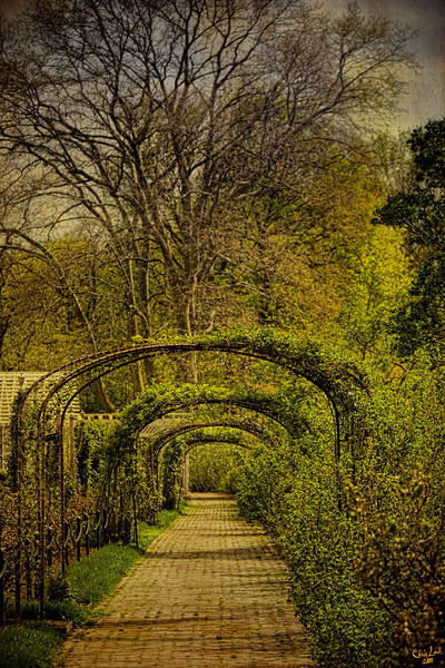 Trellis Garden At Brooklyn Botanical Garden