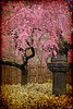 Springtime in Asia At Brooklyn Botanical Garden