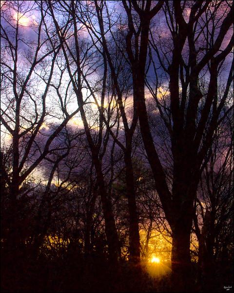 Winter Trees Sunset At Brooklyn Botanical Garden