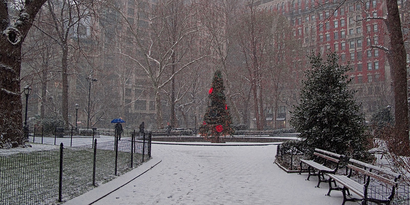 Christmas Tree in the Snow at Madison Square Park, NYC