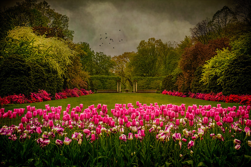 Tulips At The Entrance