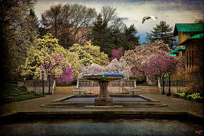 Rainy Day In Magnolia Season At Brooklyn Botanical Garden