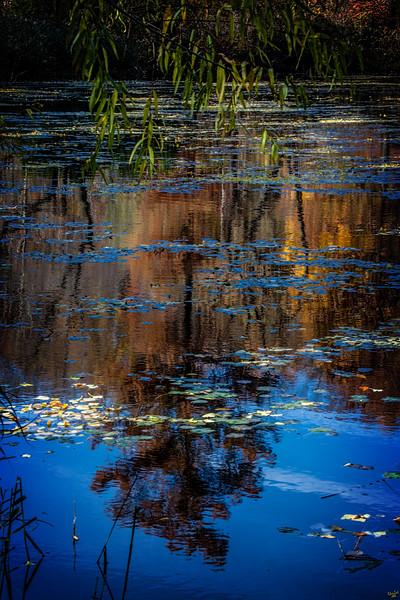 Pond Reflection, Prospect Park