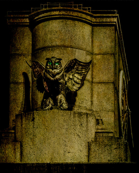Gotham Owl