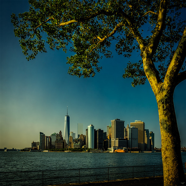 Manhattan Under A Tree