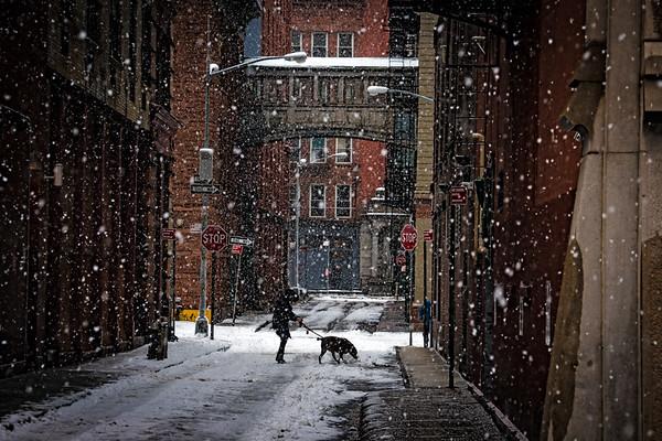 The Dog Walker Of Staple Street