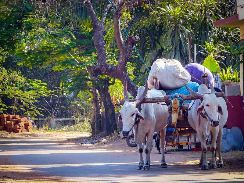 Ox and Cart, Goa, India