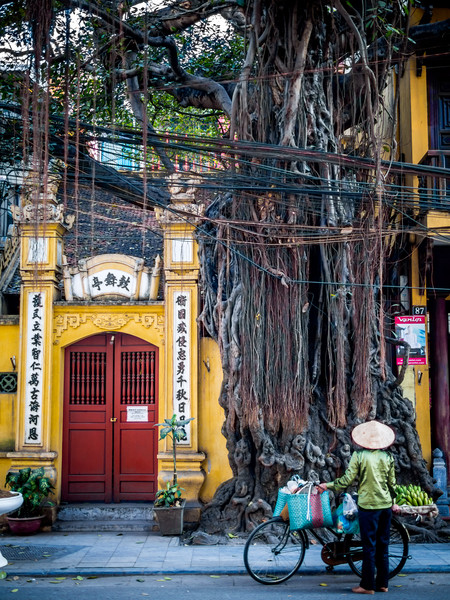 At the Old Tree, Hanoi, Vietnam