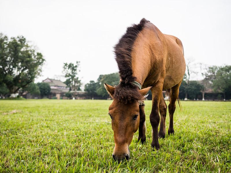 Royal Horse, Hue