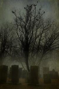 Cemetery Buzzards