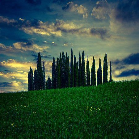 Cypress Sundown