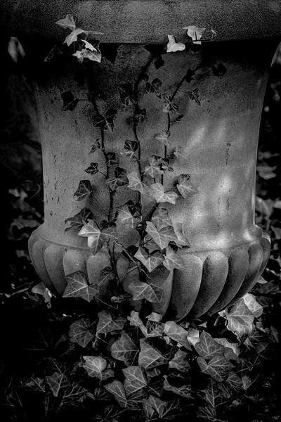 Urn and Ivy