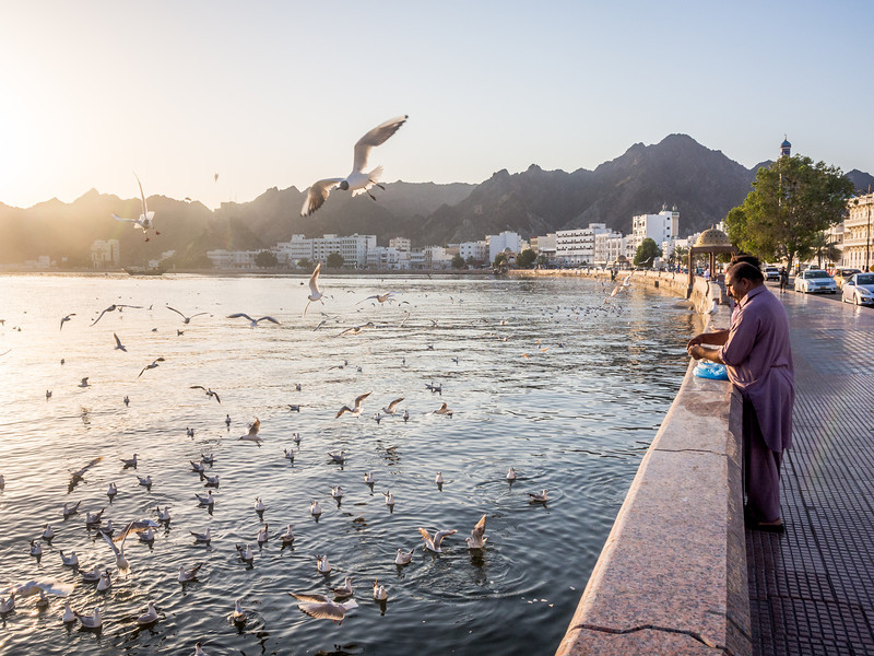 Feeding the Seagulls at Muttrah, Muscat, Oman