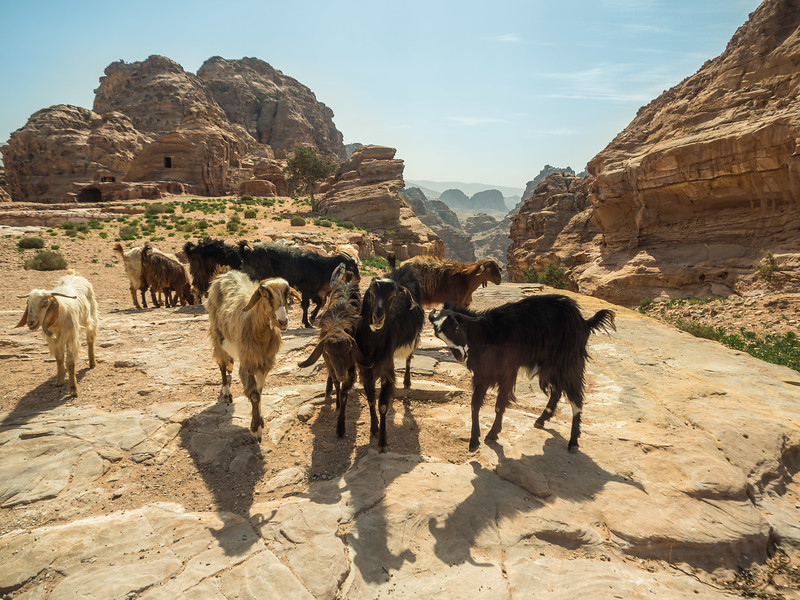 Goats on the Rock, Ain't No Surprise, Petra