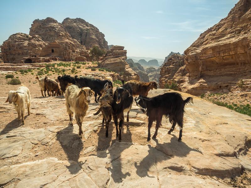 Goats on the Rock, Ain't No Surprise, Petra