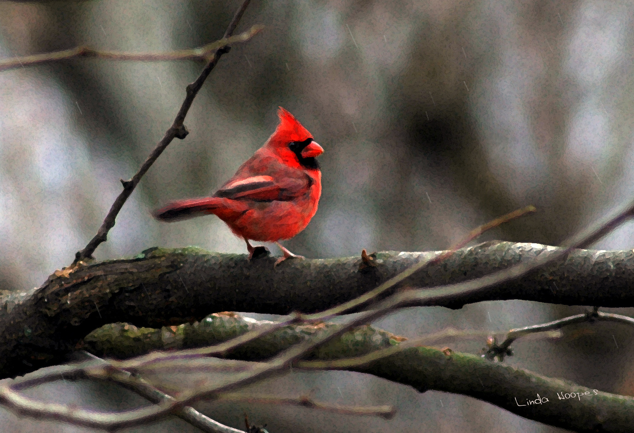 """Cardinal in the Snow""<br /> <br /> A photograph into painting transformation"