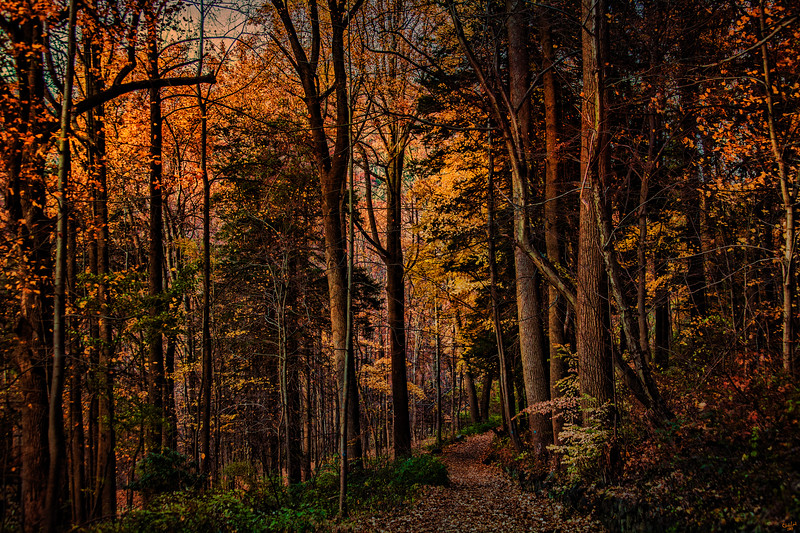 Woodland Trail, Cold Spring, New York